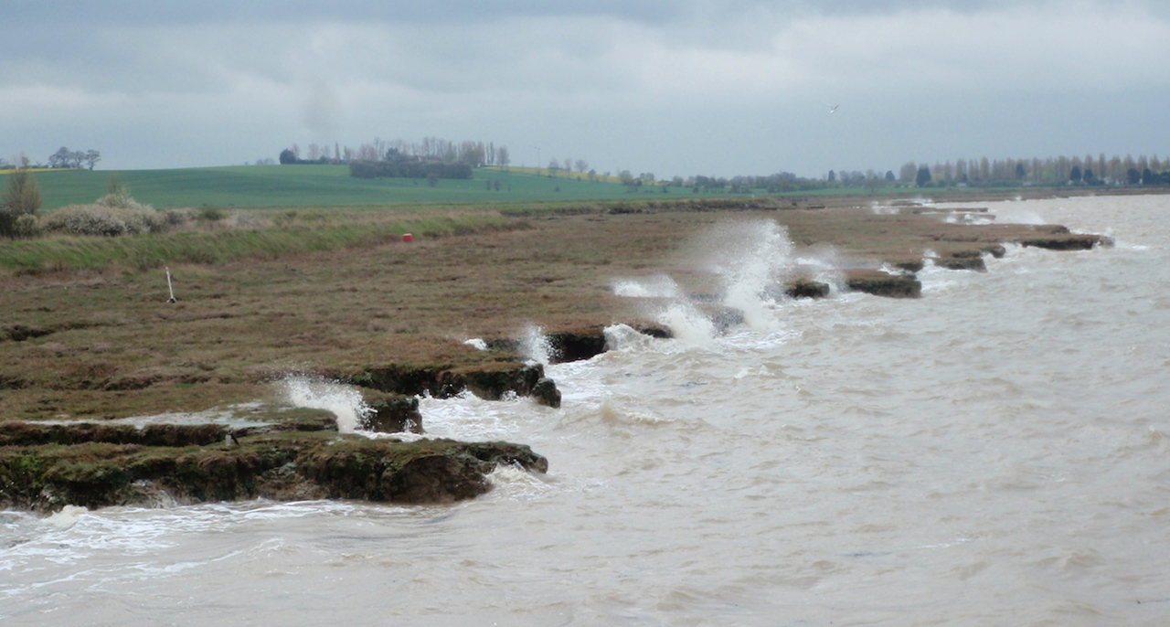 Waves and marshes