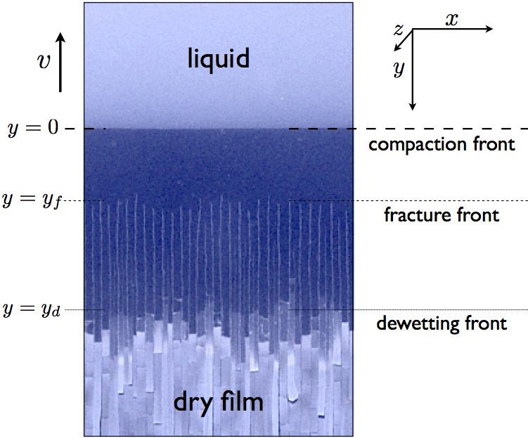 Thin colloid film drying and cracking